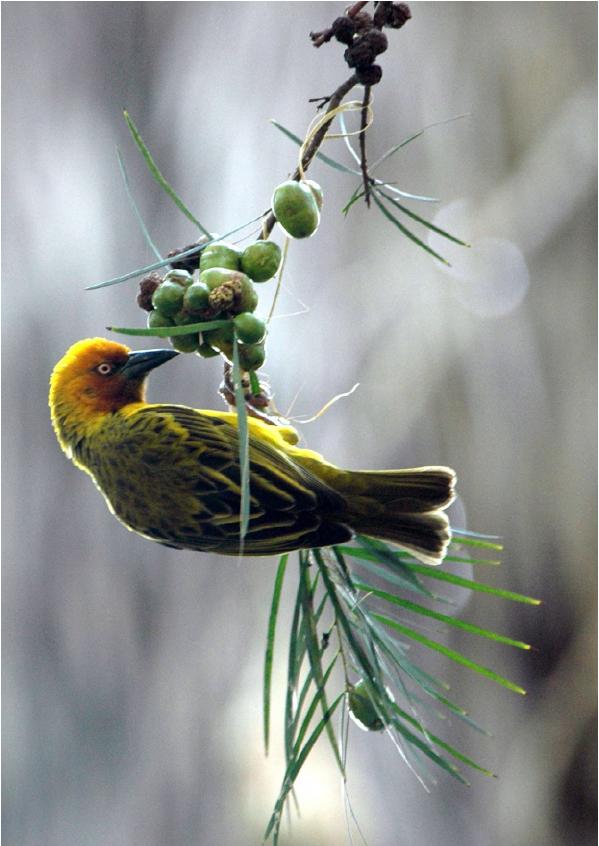 Quiko-Vogel_voer_Vogel-onderste-boven
