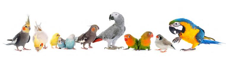 Quiko-diervoeders-reeks-kleine-vogels